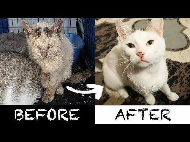 2 AMEOWZING Homeless Cat Transformations!