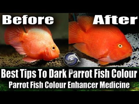 Change Parrot Fish Body Colour ( Lite To Dark ) | Share Some Tips Urdu And Hindi