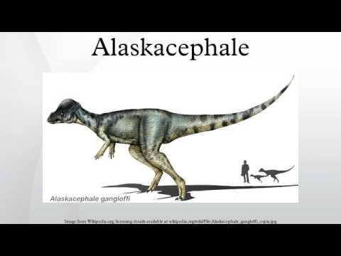 Alaskacephale