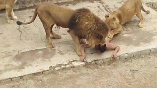 ANIMAIS QUE FORAM SACRIFICADOS POR IMPRUDÊNCIA HUMANA | Curiosidades