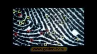 Галилео. Криминалистика 2. Дактилоскопия (ч.2)