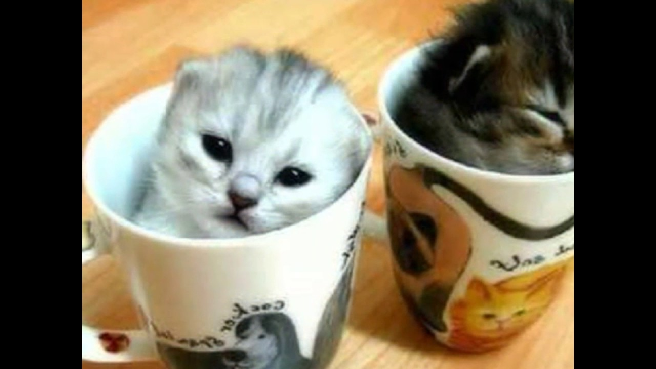 Photo de b b chat trop mignon r cap youtube - Images de chats trop mignons ...