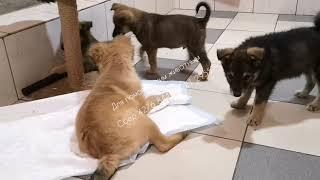 Чем занимаются животные в приюте Видео от волонтеров