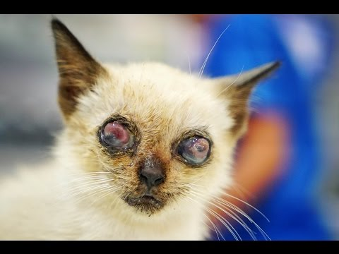POOKIE´S EYES HAVE BEEN DESTROYED !!! HELP US SAVE HIM!!!