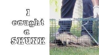 I caught a SKUNK