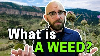 Why Are Some Plants Considered Weeds and Others Aren