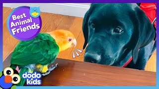 This Parrot Just Got A Little Puppy Brother, And He Is NOT Happy! | Best Animal Friends | Dodo Kids