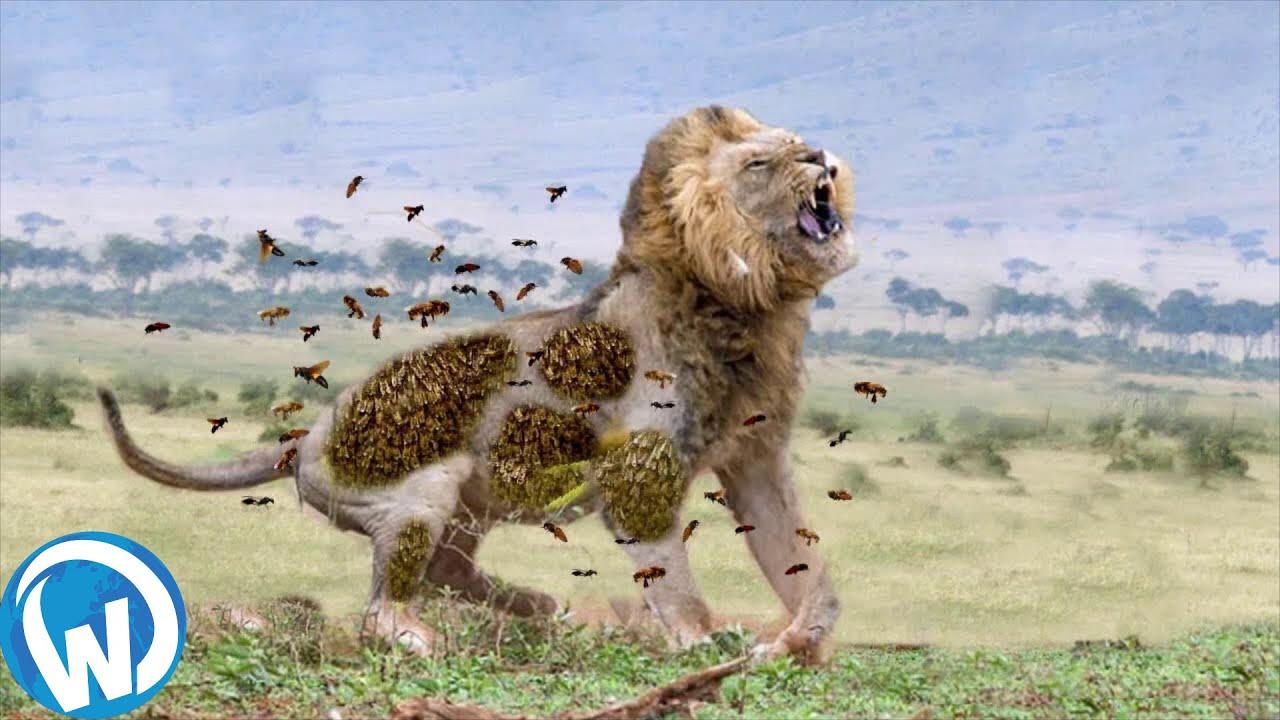 Download He Never Stood A Chance... Animal Fights Filmed Mercilessly!