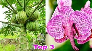 TOP 3 MAIORES FAKE NEWS DE PLANTAS NA NET !!