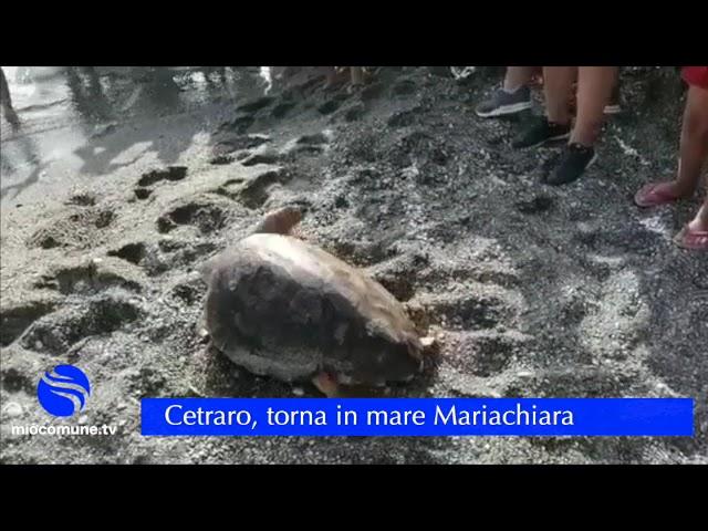 Cetraro, torna in mare Mariachiara, la tartaruga salvata da un amo - VIDEO