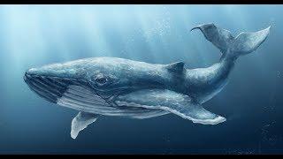 танец кита!