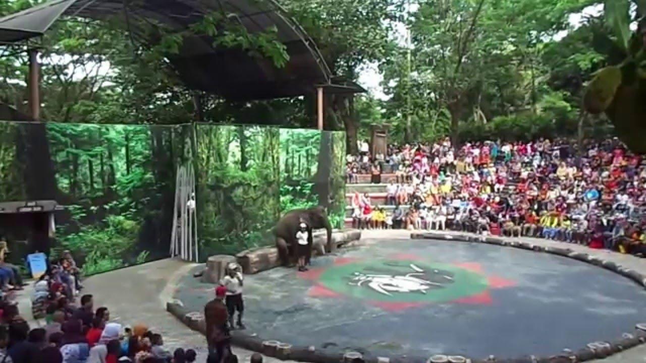 Pertunjukan Gajah Taman Safari Indonesia Ii Pasuruan Indonesia