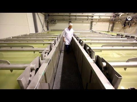 OSM Włoszczowa, Pologne - Energie pour l'industrie agro-alimentaire - Veolia
