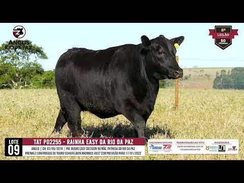 LOTE 09 PO2255 RAINHA EASY DA RIO DA PAZ - Prod. Agência e TV El Campo