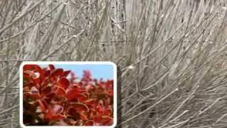 Cięcie drzew i krzewów - kalendarz ogrodniczy Greenmill