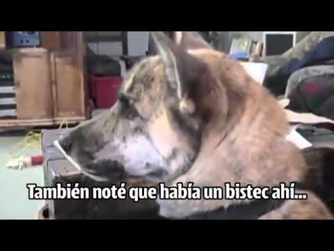 PERRO HABLANDO DE COMIDA XD