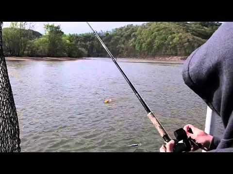 Gregg Thomas' Battle The Beast Guide Service Cave Run Lake, Kentucky Muskies