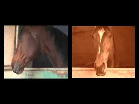 Spot Video Horse Tv