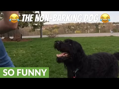 George the non-barking dog will melt your heart!