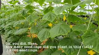 [Seed Treatment]CGMMV Control 2