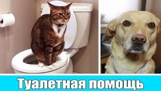 Шарик Шоу - Туалетная помощь