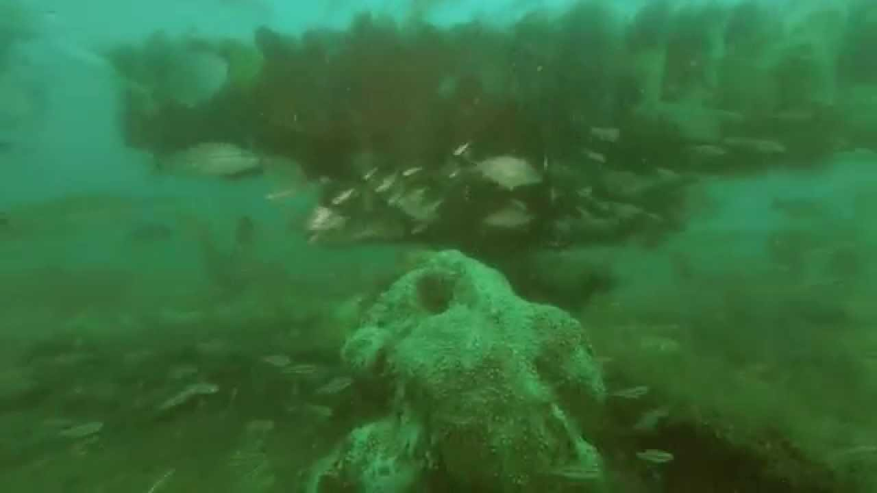 Scuba Diving The Wrecks Off New Smyrna Beach Florida