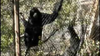 Sounds of Primates