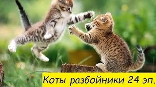 №24.  The cats playing and fighting.  Коты играют и дерутся. Лучшие приколы