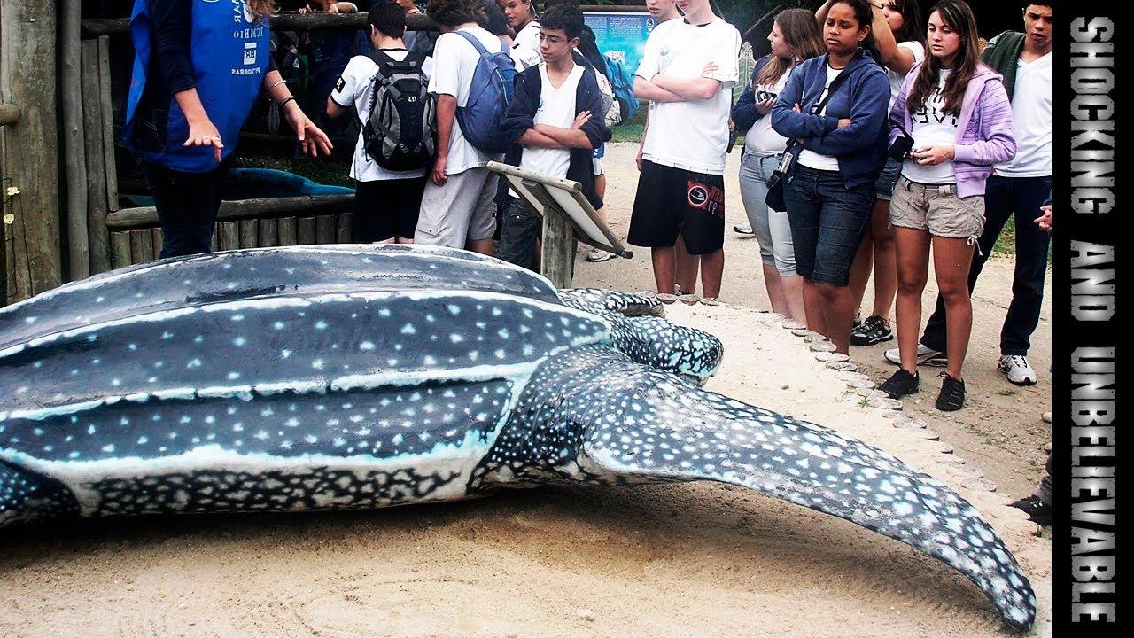 самая большая черепаха фото