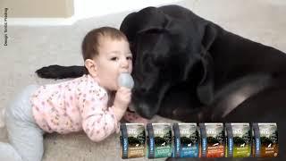 Funny dogs & NUTRIVET zdrava hrana za pse i mačke (13)