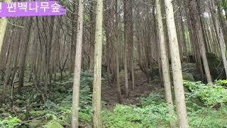 건천 편백나무숲 (포항에서 당일코스)
