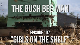 "Rescuing Bees on a Trailer and a Sweet Box of Bees Part (3 of 3) - Episode 106: ""Girls on the Shelf"""