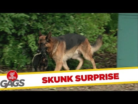Dog Fetches Back Smelly Surprise