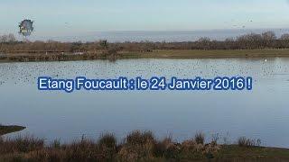 ETANG Foucault / Oiseaux d'eau / Brenne en Hiver ! BRUITX