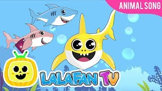 Baby Shark   Kids Songs and Nursery Rhymes   Animal songs by Lalafan TV