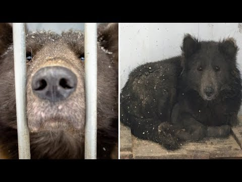 Mysterious DOG with the face of a tiny BEAR baffles locals after found in Russia