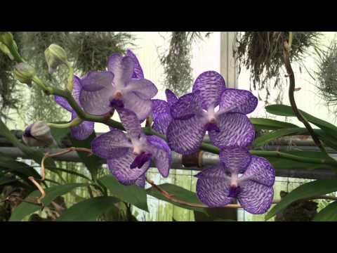 Visit to an Orchid Greenhouse