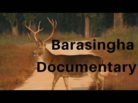 Documentary: Barasingha 1