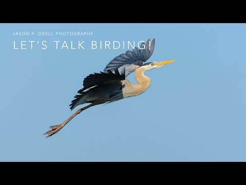 Talking Bird Photography with Jason P. Odell