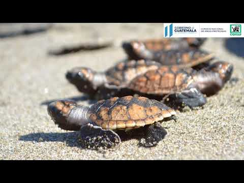 ¡día-mundial-de-las-tortugas-marinas.-🐢🥚!