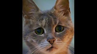 самые грустные коты