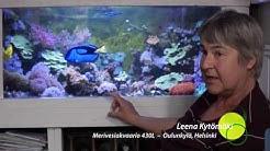 Akvaario: Leena Kytömäen merivesiakvaario