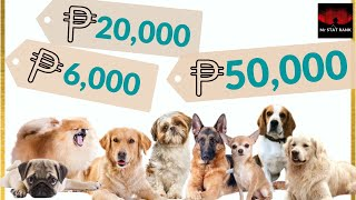 PRICE LIST | TOP 10 DOG BREEDS in the Philippines