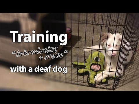 Deaf Dog Training: Intro To Crate