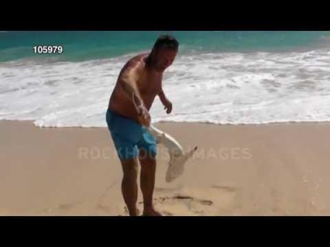 Stock Footage Video - Shark Bite At Boa Vista, Cape Verde Islands   RockHouse Images