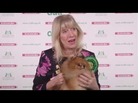 Crufts 2017 | Best of Breed winner Averil Cawthera-Purdy and pomeranian Tarquin