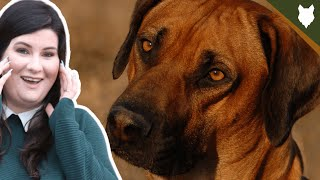 You NEED To KNOW This Before Getting A RIDGEBACK