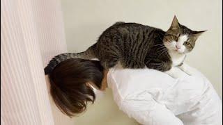 無駄にお母さんの背中に乗ってきた猫