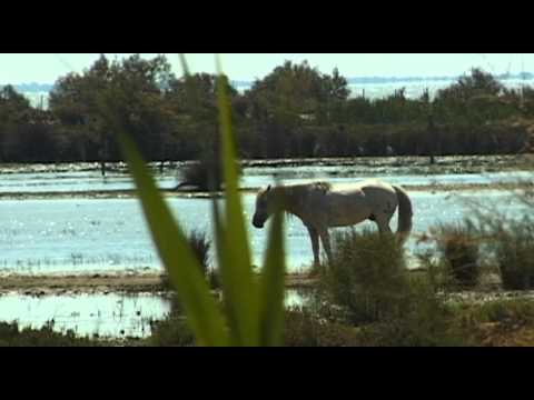 Camargue Vacation Travel Video Guide