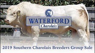 Waterford Charolais Southern Charolais Breeders Group Sale 2019